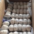 natural de color blanco puro ajo