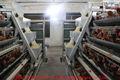 pollos Poultry Farms en venta