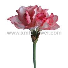 tallo flor grande amaryllis