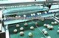 Shenghui fj-d1 sola fila electrónico clasificadora de huevo