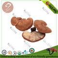 Chino orgánico de Ganoderma lucidum