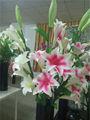 Sobre la venta de porcelana de alta calidad se venden bien flores falsas/flor artificial que hace