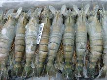 HOSO Fresh Water Prawns/Shrimps/Scampi (Macrobrachium Rosenbergii)