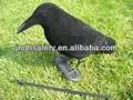 cuervo decoy