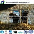 la alimentacion de la jaula/jaulas de alimentación/jaulas de visón