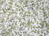 /p-detail/india-frescas-flores-de-jazm%C3%ADn-400001251854.html