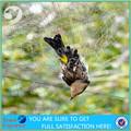 sem nós rede de proteção anti pássaro