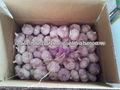 precio de ajo rojo fresco