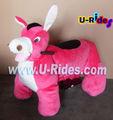 Donkey walking animal ride