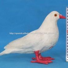 Las palomas mensajeras de color blanco para la venta