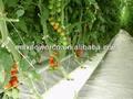 completo sistema hidropónico para crecer de tomate