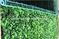 De plástico de la cerca de madera de boj, conserva de madera de boj topiary, shengjie artificial bola de madera de boj
