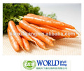 100% natural extracto de zanahoria beta caroteno en polvo