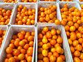 comprador de naranja natural