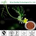 100% natural puro de protodioscina tribulus terrestris extrato de pó