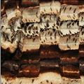 10mm animal impressão em tecido plush