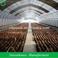 Anti- el túnel de viento de setas de efecto invernadero