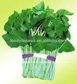 WS01 Daye gran hoja semillas de espinaca de agua para la siembra