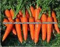 betacaroteno natural el 10%