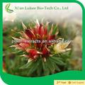 la buena calidad natural de rhodiola rosea extracto de la raíz