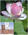 100% Puro y Natural Extracto Nelumbo nucifera