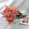 Flores verdaderas del tacto con el crisantemo funeral