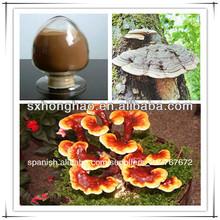Extracto de ganoderma polvo 10%- 40% polisacáridos
