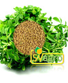 Supply high quality Fenugreek Extract,100% natural