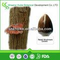 Natural extracto de ganoderma 50% polisacáridos en polvo