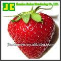 Vendre 100% naturel élevé de fruits concentré en poudre-- poudre de fraise