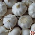 China 5.5cm frescos de granja de ajo blanco normal