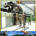 My Dino-Fósil de dinosaurio, esqueleto animal para el modelo de esqueleto de los animales