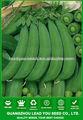 PE03 No.76 nítidas sementes de ervilha açúcar verde destinado a sementeira