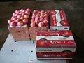 fresco y natural de manzana fuji venta al por mayor para los importadores