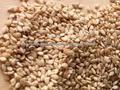 Belas semente de gergelim natural,