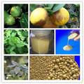 Fungicidas mancozeb 75% wg para phyllocoptes oleivorus de ceniza