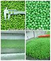 guisantes congelados verde para verduras mixtas