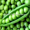 toda guisantes verdes