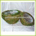 plantasdeinterior plantas ornamentales de interior de la planta de interior apoya