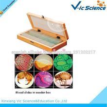 La enseñanza escolar y microscopio biológico encuesta médica preparan portaobjetos de vidrio