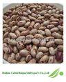 2013 safra de feijão salpicados de atacado de importação da china