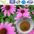 20g muestras gratis de echinacea extracto de la hierba