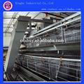 Um- tipo tipo de quadro e arame de ferro material de alta qualidade automática camada de gaiolas de frango