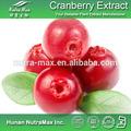 100% التوت البري الطبيعية مسحوق عصير الفاكهة، عصير التوت البري المجفف، التوت البري المجفف