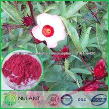 Planta Natural extrato Extrato de flores de hibisco 20-1