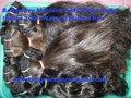 onda profunda virgen remyindio del pelo humano de la máquina trama del pelo al por mayor