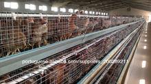 galinheiro para as galinhas poedeiras