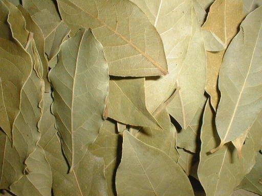 Daphne Leaf