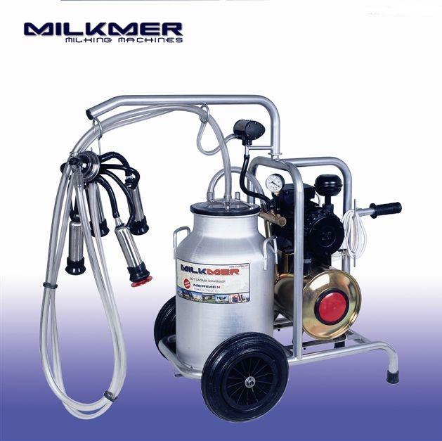 milked by machine