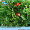 CROP 2012 CHINA FROZEN ORGANIC CHEAP SEAWEED SALAD /FRESH WATER SEAWEED WITH GOOD QUALITY